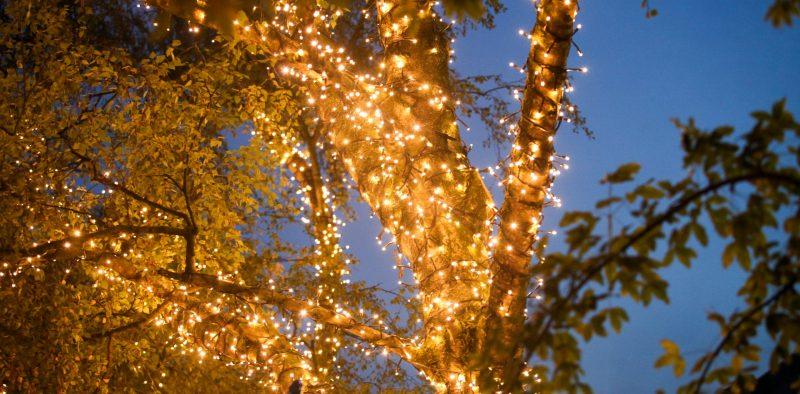 Lichterketten Baum